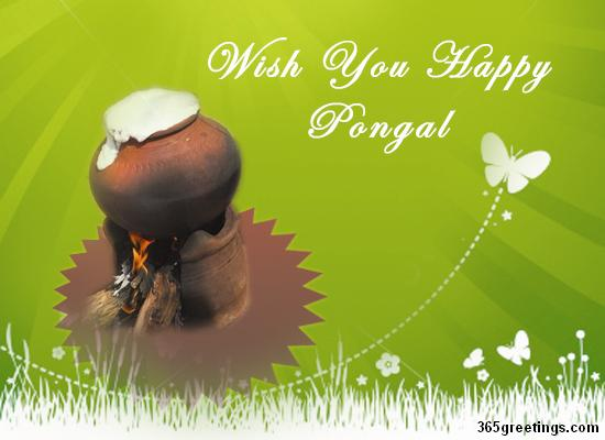 Pongal greetings with happy pongal wishes post card from pongal greetings with happy pongal wishes post card from 365greetings m4hsunfo